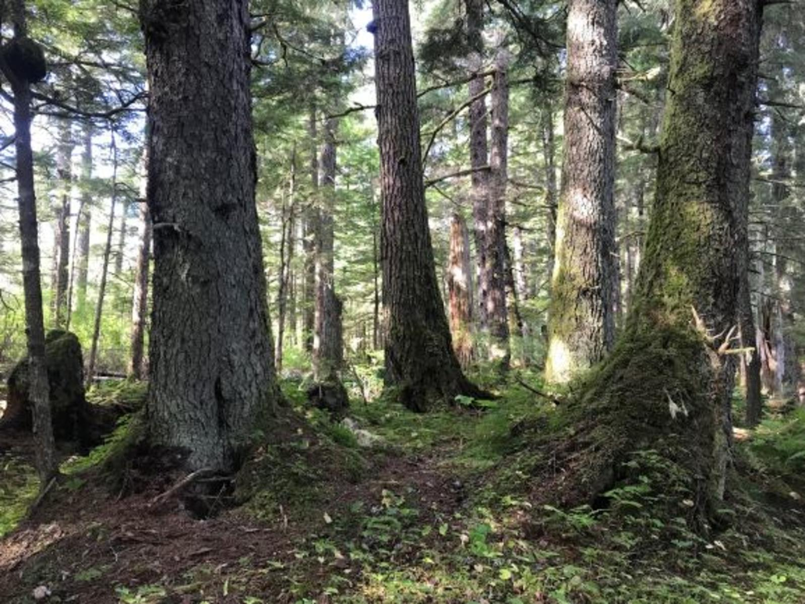 Located in Southeast Alaska, the Tongass National Forest is the largest National Forest in the country.
