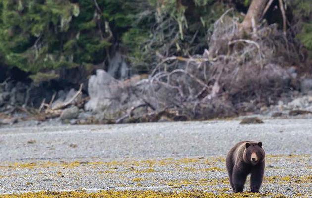 Audubon Alaska's Ecological Atlases