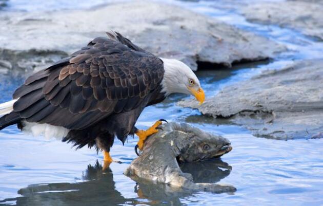 Audubon Alaska Supports the Historic Nomination of Representative Deb Haaland