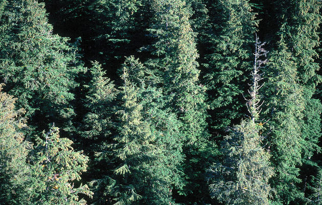 Federal Judge Sends Massive Logging Project on Prince of Wales Back to the Drawing Board