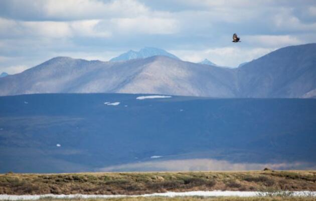 Alaskans Oppose Planned Lease Sale of Sacred Coastal Plain