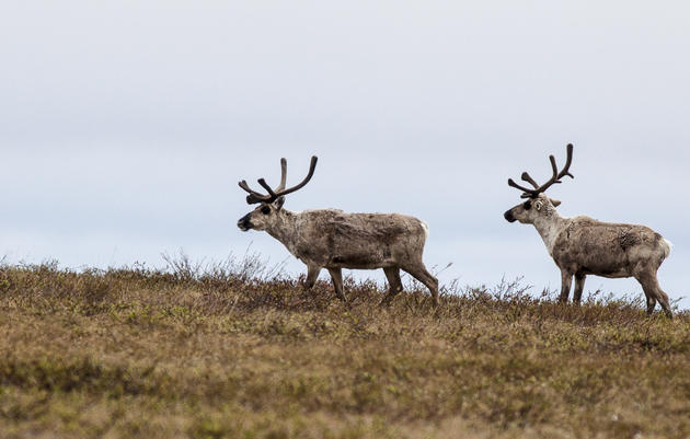 New Oil Findings Don't Change Responsibility to Protect Western Arctic Natural Wonders