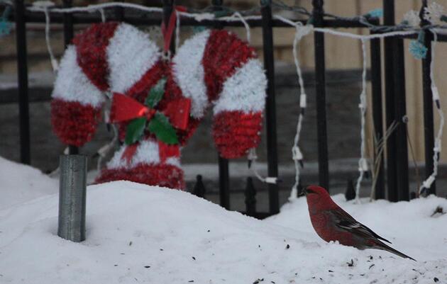 'Tis the Season for the Audubon Christmas Bird Count