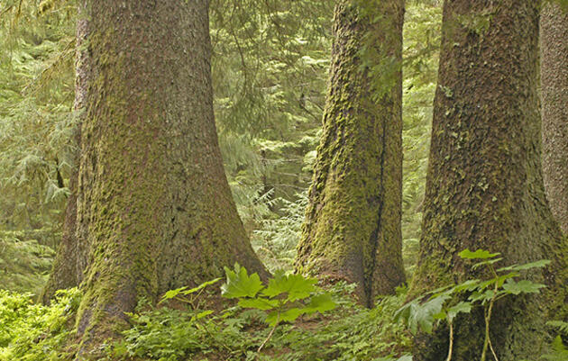 "Forest Service's ""Landscape Level Analysis"" ignores ecology and economics"