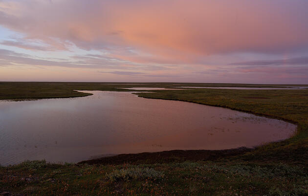 Keeping Teshekpuk Lake wetlands habitat protected