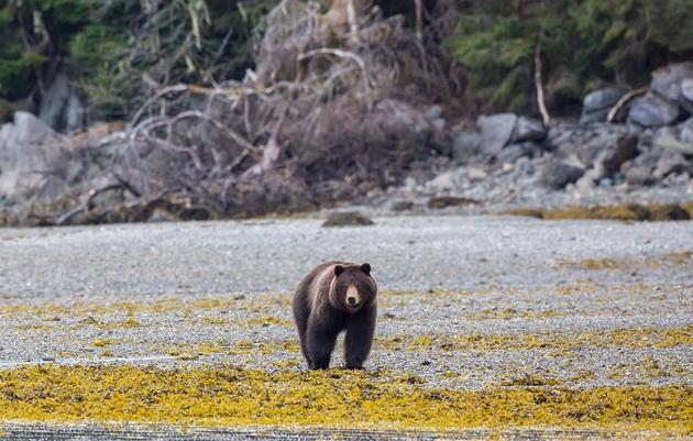 Ecological Atlas of Southeast Alaska