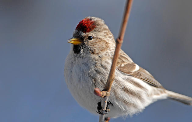 Audubon Christmas Bird Count