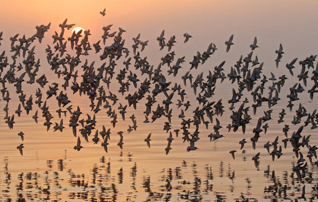 Part 2: Your Turn to Map Bird Migration!