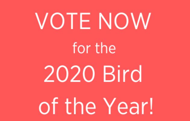Audubon Alaska's 2020 Bird of the Year