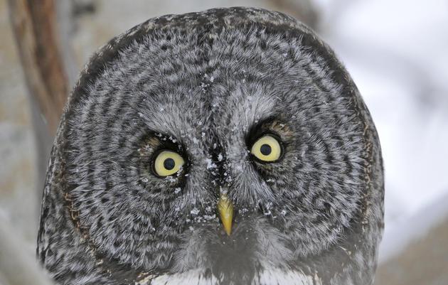 Donate to Audubon