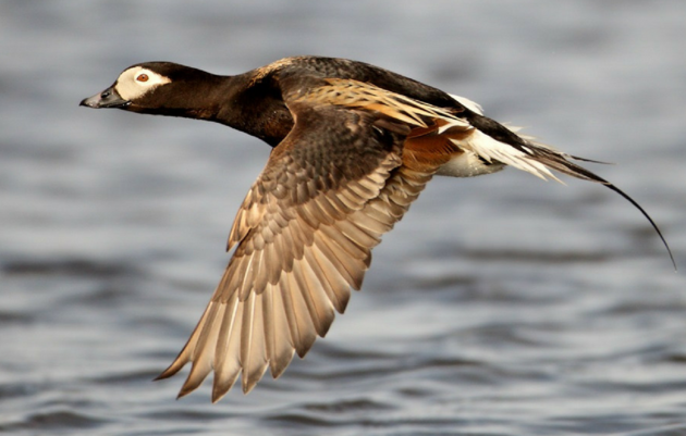 Balance in the Arctic Ocean: Audubon's Position