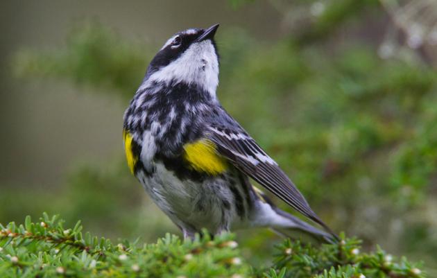 Anchorage Bird Walks