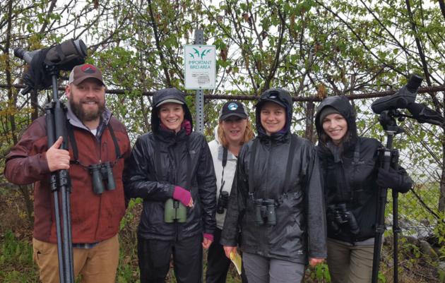 Volunteer with Audubon Alaska
