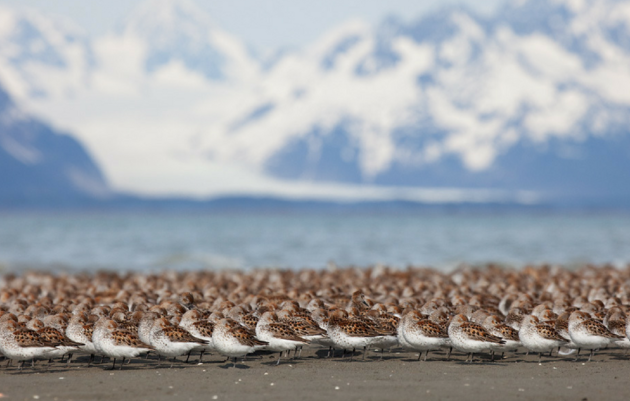 Important Bird Areas