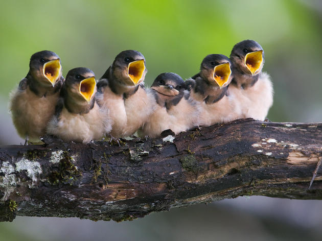 Bird Festivals in Alaska