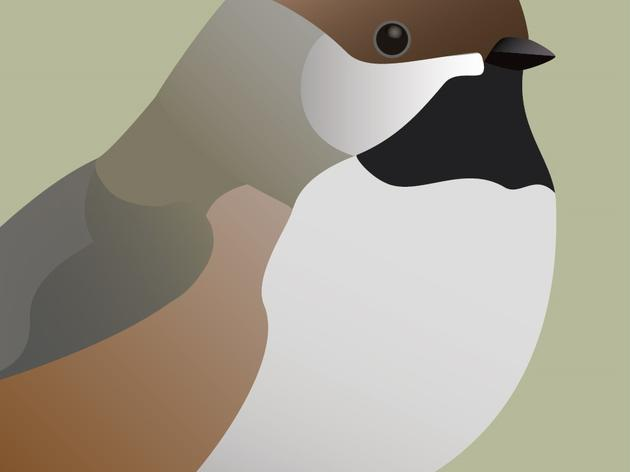 Audubon Alaska 2017 Bird of the Year