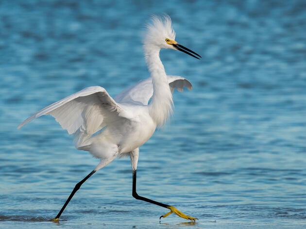 New Federal Bill Will Help Bring Birds Back