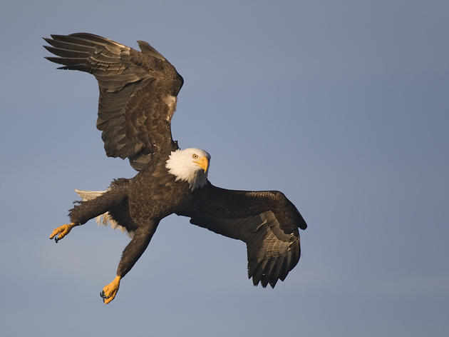 The Southeast Alaska Birding Trail: A Guide to the Southeast's Natural Wonders