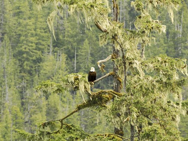 Tongass National Forest Threatened by the Congressional Review Act