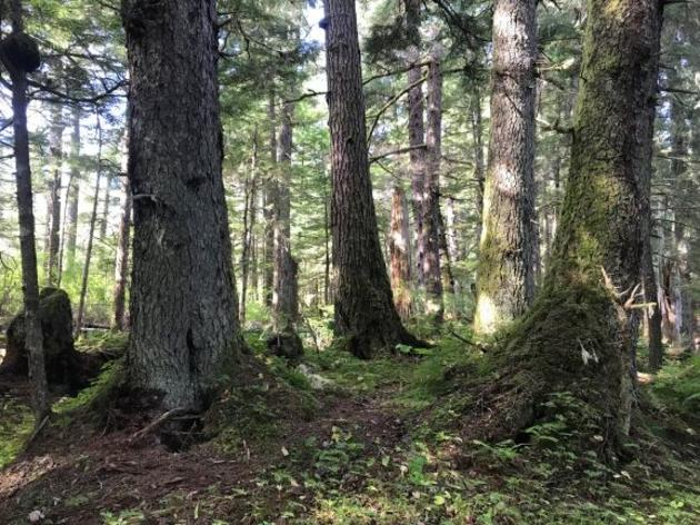 A Win for the Tongass National Forest and a Win for the Rule of Law