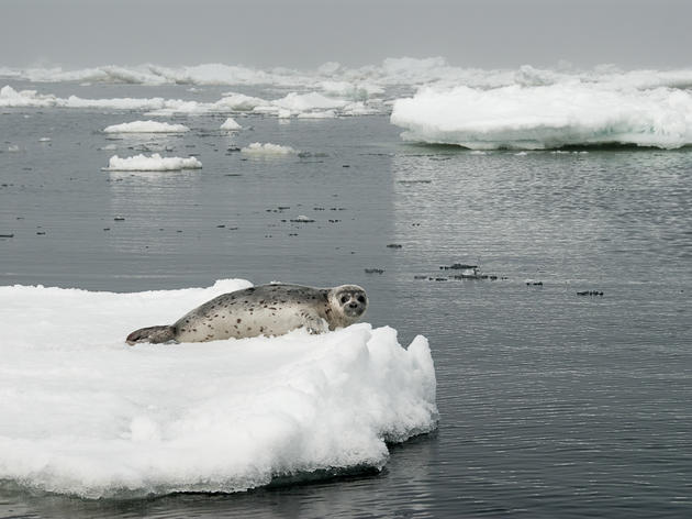 Reversal on Arctic Ocean Protections Puts Vital Arctic Marine Areas at Risk
