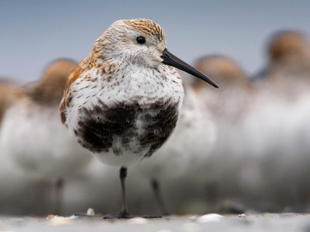 Teshekpuk Lake: A Wildlife Safe Haven