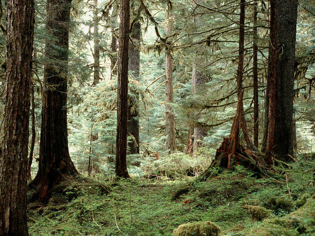 Keep the Tongass wild and roadless
