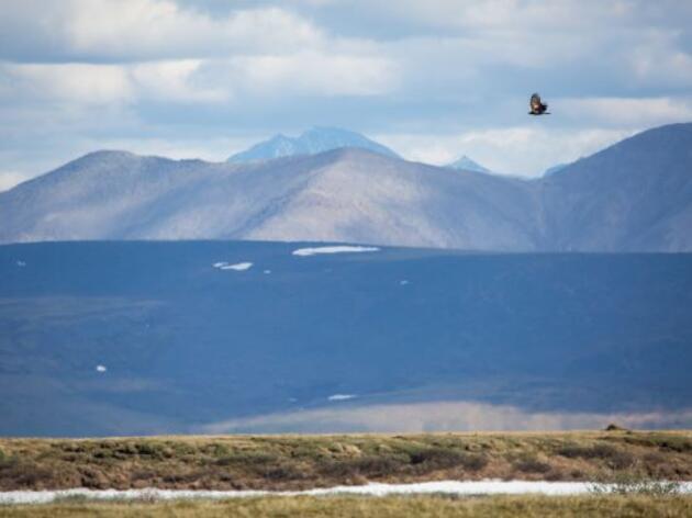 Arctic Refuge Oil Lease Sale Compromises Vital Alaska Wilderness