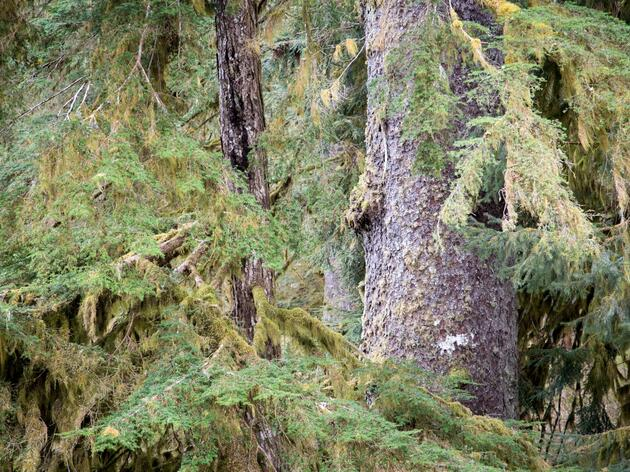 Legal Victory in the Tongass National Forest Goes Unchallenged by Department of Justice