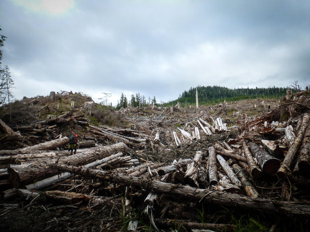 Lawsuit Challenges Massive Timber Sale in Alaska National Forest