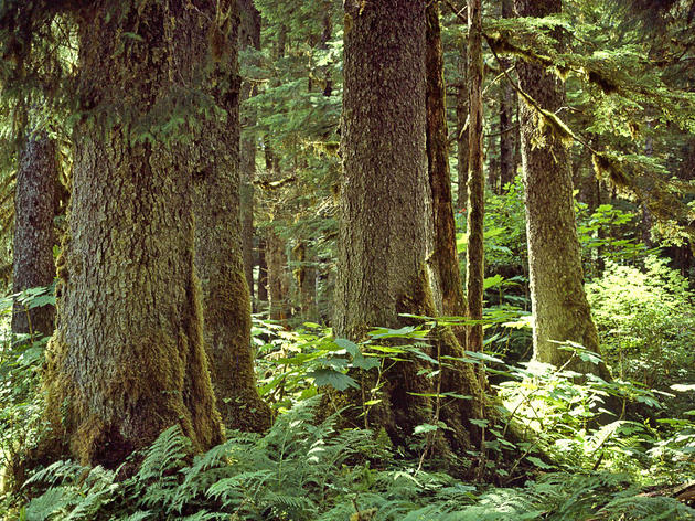 Changes to Roadless Rule puts Alaska's old-growth forests at risk