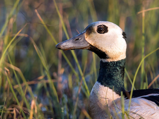 Department of the Interior Agrees to Trade Away Vital Bird Habitat