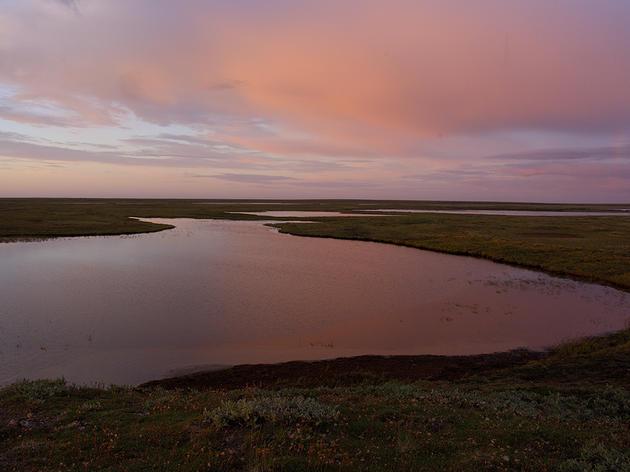 Keeping Teshekpuk Lake wetlands habitat protected