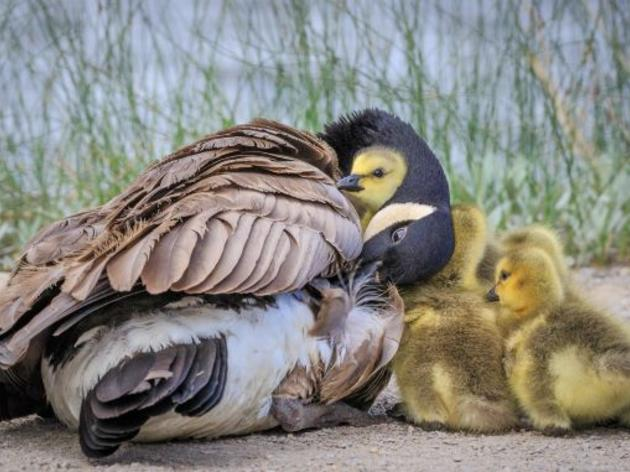 Sweet Baby Birds!