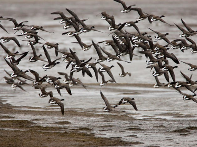 Part 3: Use Google Maps to Map & Measure Bird Migration