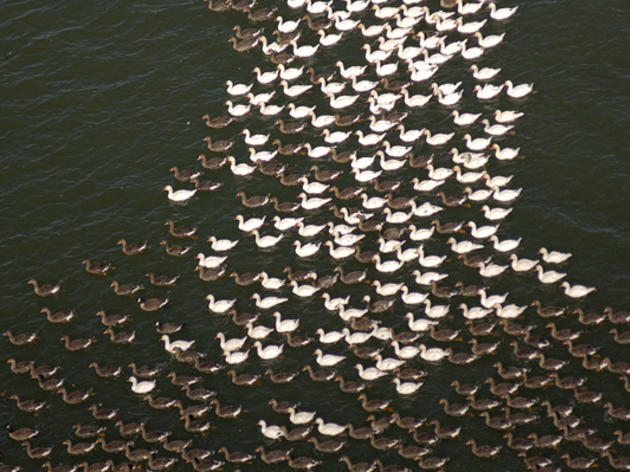 A River of Birds: North to Alaska