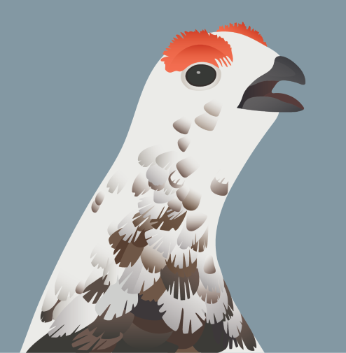 The Willow Ptarmigan is the 2021 AK Bird of the Year