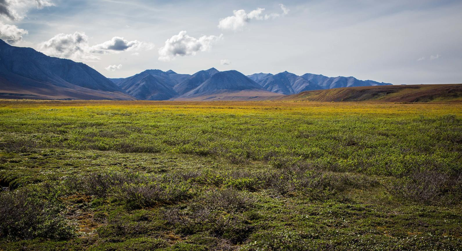 Arctic Refuge by Canning River