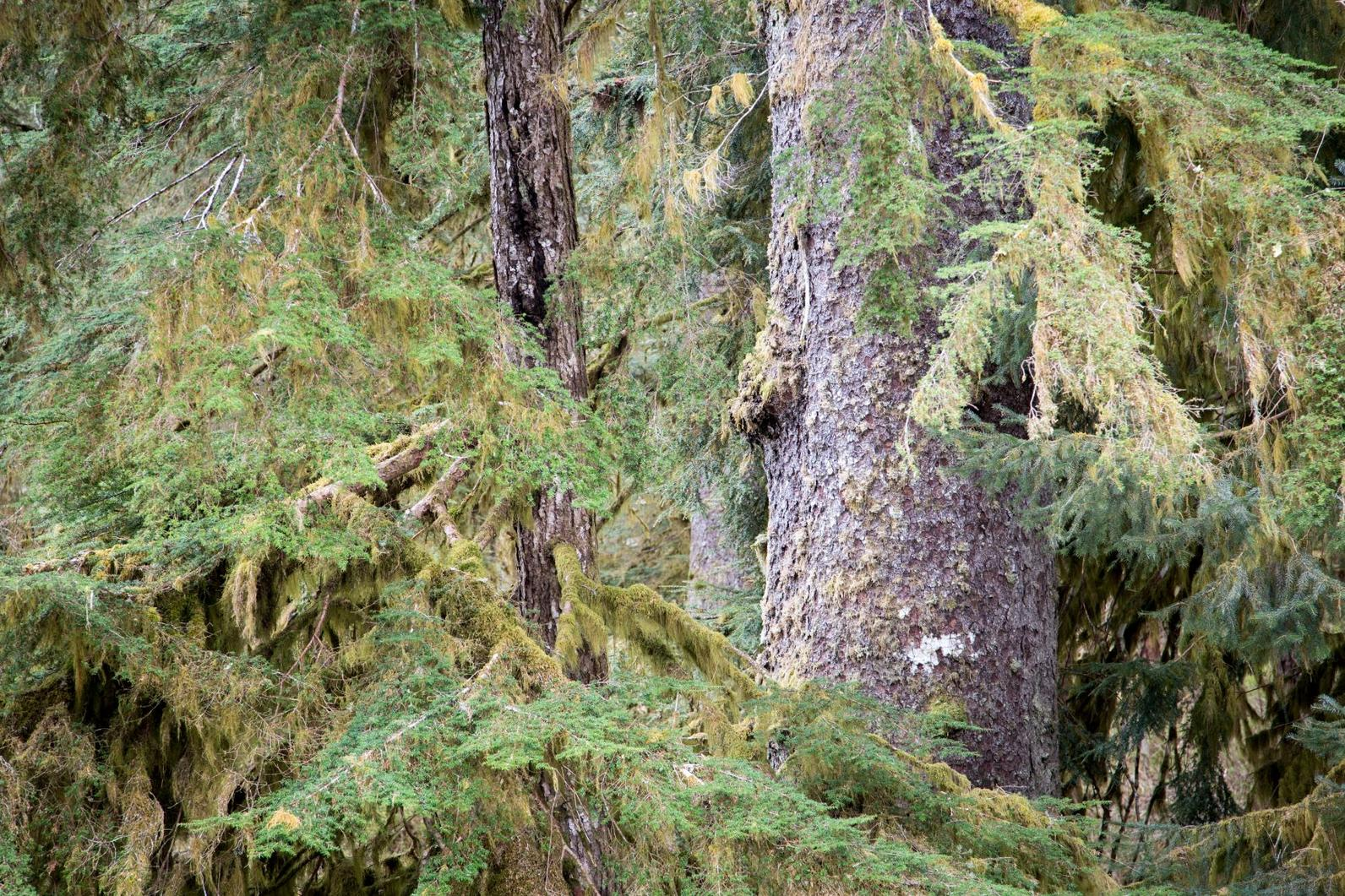 Tongass National Forest.
