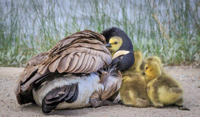 Baby birds are cute and bring us joy!