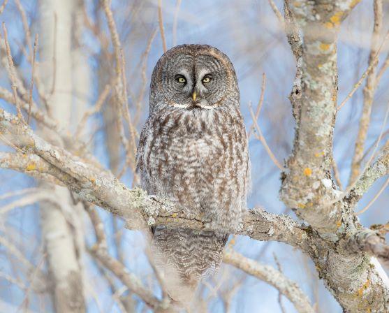 Owls are birds of prey.