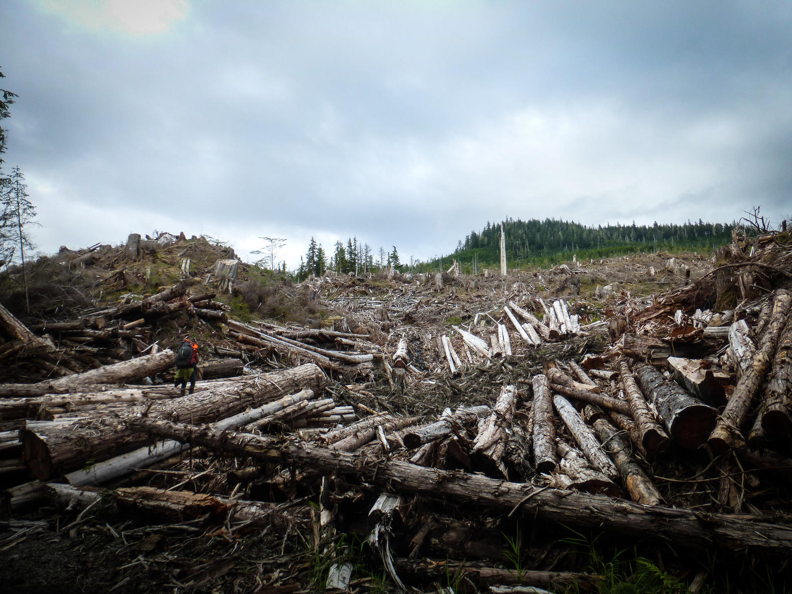 Clearcut on Prince of Wales Island.