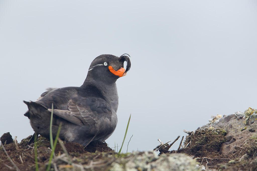 New bill will protect critical bird habitats.