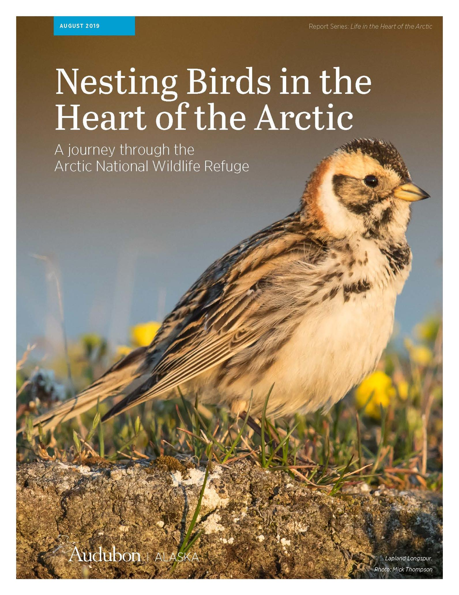 Nesting Birds in the Heart of the Arctic