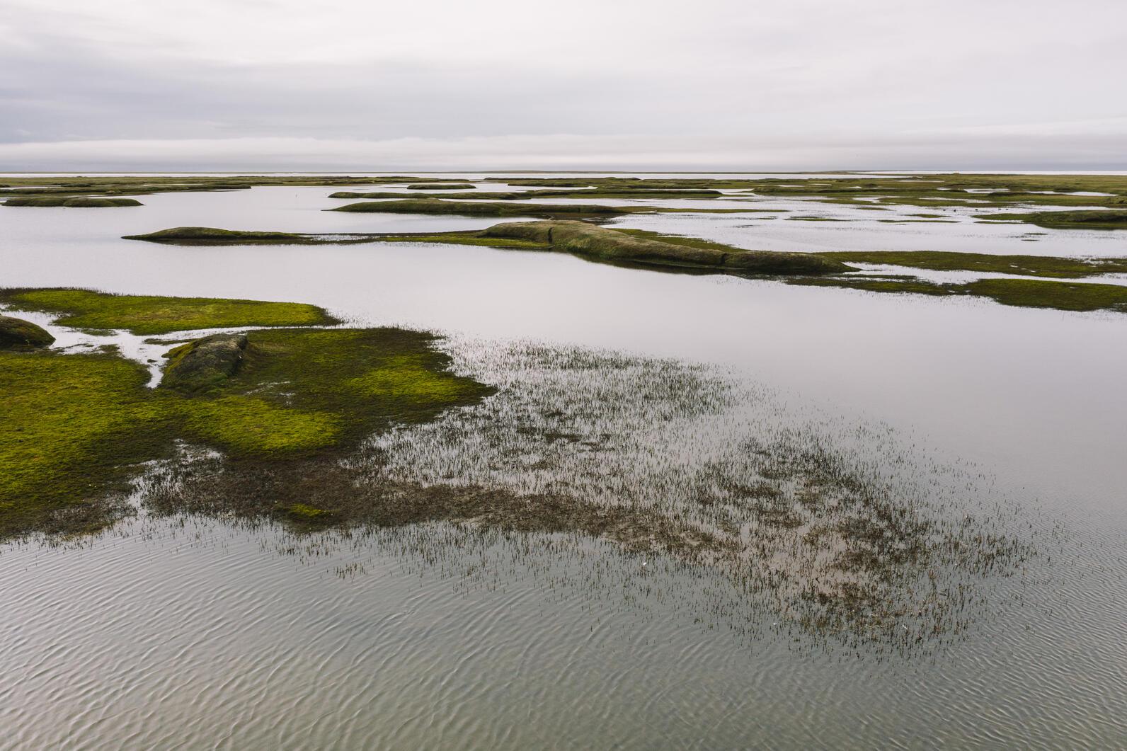 Teshekpuk Lake Wetlands in Alaska's Western Arctic.